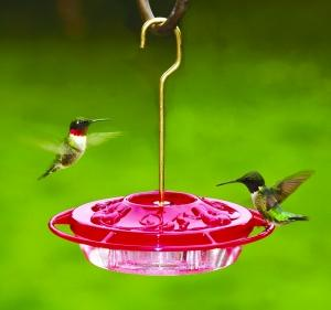 Hummingbirds at Decorative Feeder